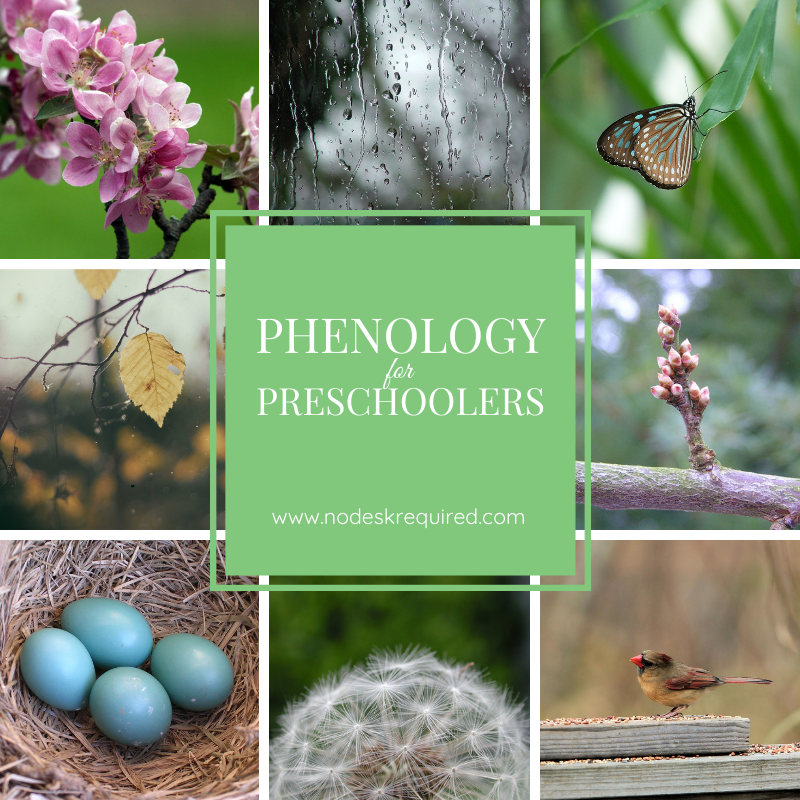 beginning phenology