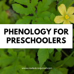 phenology for preschoolers