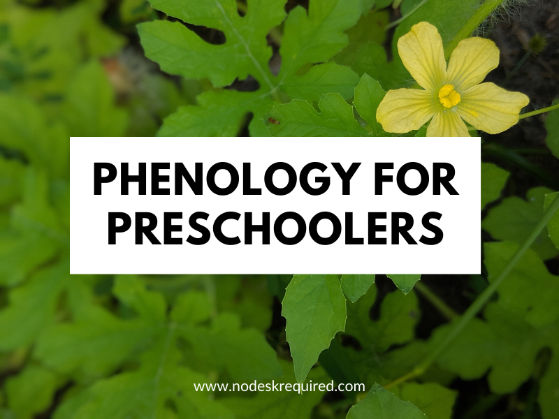 Phenology with Preschoolers