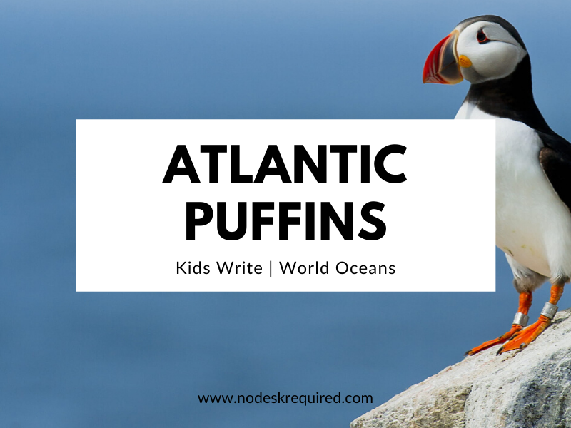 Atlantic Puffins | Kids Write