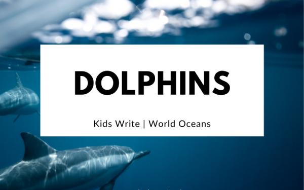Dolphins   Kids Write