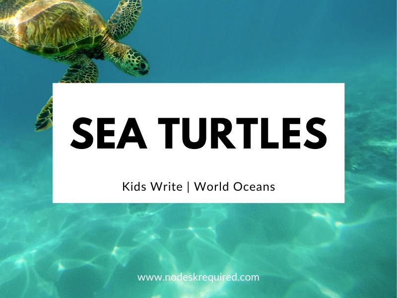 Sea Turtles | Kids Write
